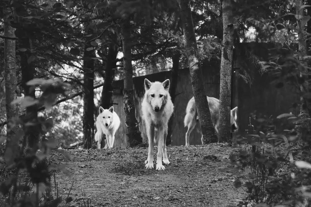 从华为离职3年我才意识到,任正非的狼性文化,才是真对员工负责